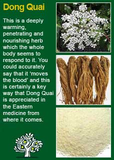 Dong quai health benefits