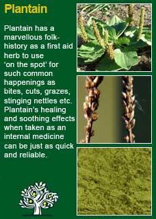 Richard Whelan Medical Herbalist Plantain